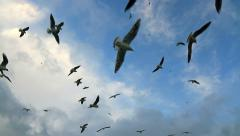 Flock of birds soaring high against the blue sky Stock Footage