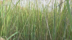 The high grass - stock footage
