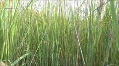 The high grass Stock Footage