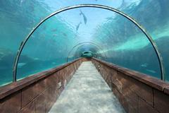 Aquarium Tunnel Kuvituskuvat