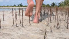 Wide angle bare foot man walking among young mangrove spikes on tropical beac Stock Footage