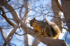 Squirrel in a tree Stock Photos