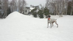 Dog looking at snowy home Stock Footage