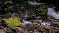 Rushing River in Lush, Dense Forest 3 Stock Footage