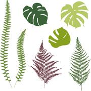Fern and monstera silhouettes. Isolated on white background Stock Illustration