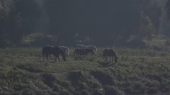 Group of horses in slow motion Stock Footage