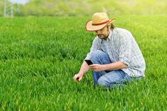 Farmer Taking Photo of Young Wheat Cultivation Field Stock Photos