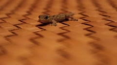 Gecko / lizzard close up Stock Footage