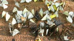 Butterfly on the ground Stock Footage