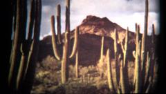 (1960's 8mm Vintage) Organ Pipe Cactus National Monument Stock Footage