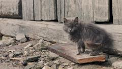 Domestic cat in the village - stock footage