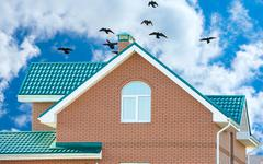 Flock of pigeons on the roof Stock Illustration