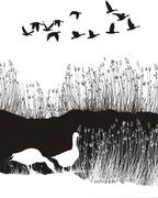 Background with reeds and wild geese - stock illustration