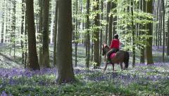 Rider in Halle Forest. Stock Footage