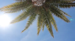 Palm tree and blue sky - holiday scene Stock Footage