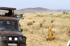 Wildlife safari tourists on game drive - stock photo