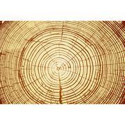 Tree rings saw cut tree trunk background. Vector illustration. Stock Illustration