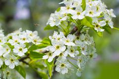 Bee Pollinating Blooming Flowers Stock Photos