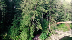 Aerial Taylor River, Washington Trees Stock Footage