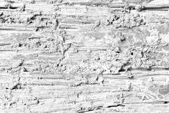 Decay wood texture background Soft tone White color - stock photo
