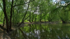 Under the trees, ultra wide shot Stock Footage