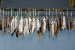 milkfish is being hung in the drying process - stock photo