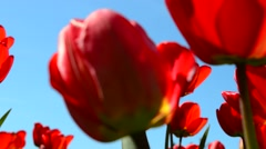 Petals on flowers Stock Footage