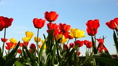 Beautiful flowers Stock Footage