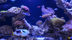 Underwater coral reef and fishes Stock Footage