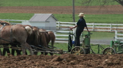 Amish boy plowing 3 - stock footage