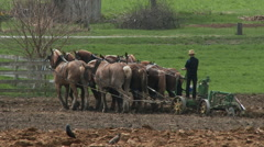 Amish boy plowing 4 - stock footage