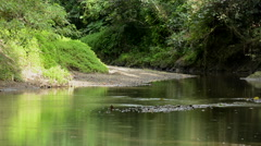 Small river in the Jungle on Panay island in Philippines Stock Footage