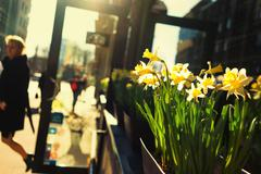 Girl leaves the shop with flowers on the street in the bright sun in the spri - stock photo