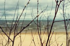 Beach and sea through the branches of willow spring Stock Photos
