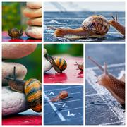 Snail business metaphor Stock Photos