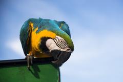 One parrot Stock Photos