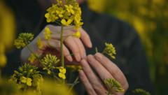 Female Farmer in Rapeseed Cultivated Agricultural Field Examining Plants Growth Stock Footage
