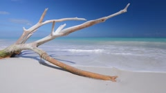 Large white-washed branch of driftwood lies on beautiful tropical Caribbean b Stock Footage