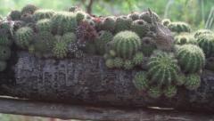 Cactus Zen Garden Pan right 2 - stock footage
