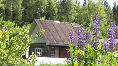Old wooden house in forest in summer - stock footage