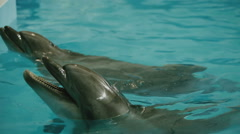 Two dolphins in the pool Stock Footage