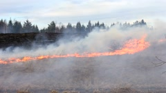 The fire spread through the grass and forest, quickening shooting Stock Footage