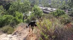 Dog, Laguna Beach, California, Hiking Trails Stock Footage
