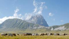 Farm animals herd in impressive ranch landscape Stock Footage