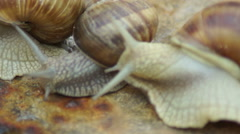 Three Snails Stock Footage