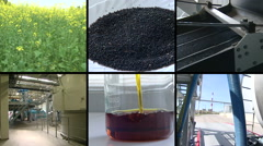 Plant blooms. Rape seed oil biofuel production. Footage collage. Stock Footage