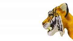 Growls tiger head (side view). Stop motion animation. Stock Footage