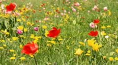 Spring flower meadow Stock Footage