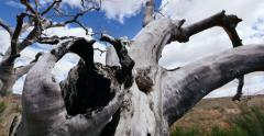 Stock Video Footage of Badlands Wilderness Wild West Dead Tree Global Warming Tracking Shot Stump