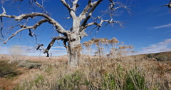Stock Video Footage of Badlands Wilderness Wild West Dead Tree Global Warming Tracking Shot